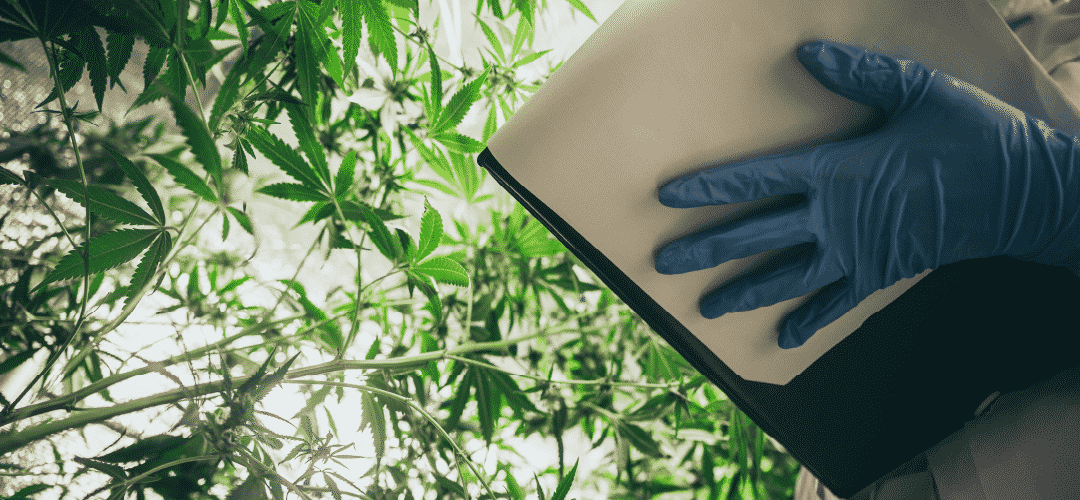 How to Create a Cannabis Extraction Business Plan